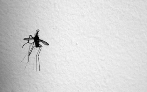 mosquito-smartphone-cc-stmuro